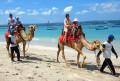 hi-camel-adventure