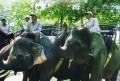 bali elephant village