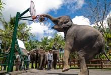 elephant park tour