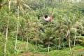 umapakel-baliswing
