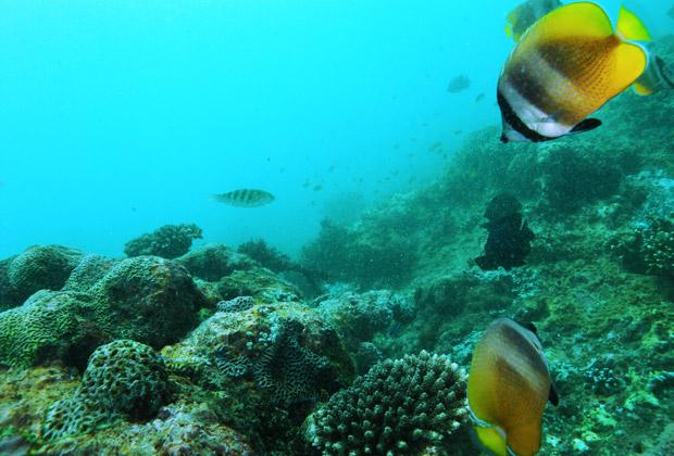 観光 地図 ダイビング