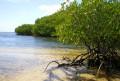 レンボガン島 de マングローブ&シュノーケリング